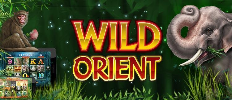 Wild Orient Online Slot Gaming Club Online Casino