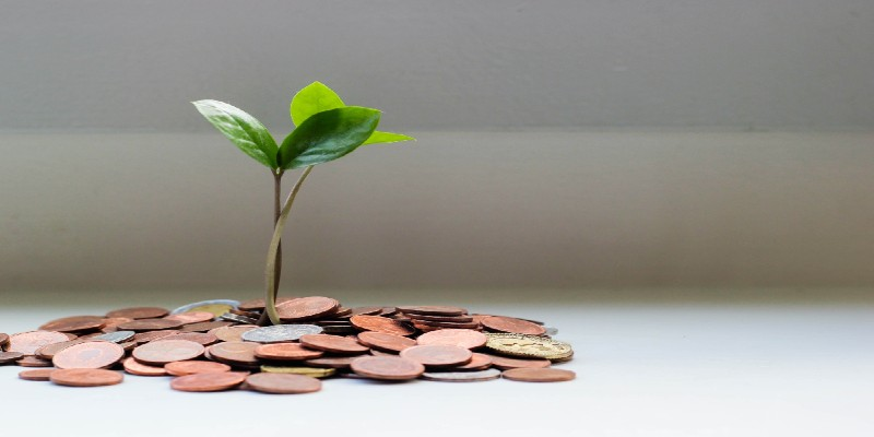 A plant growing from a pile of coins.