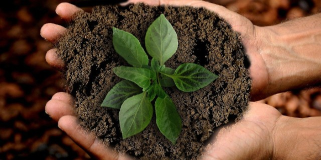 A pair of cupped hands nurturing a small green plant.