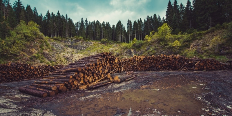 Deforestation can contribute to climate change