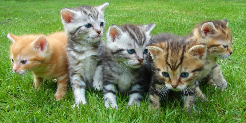 five kittens in grass
