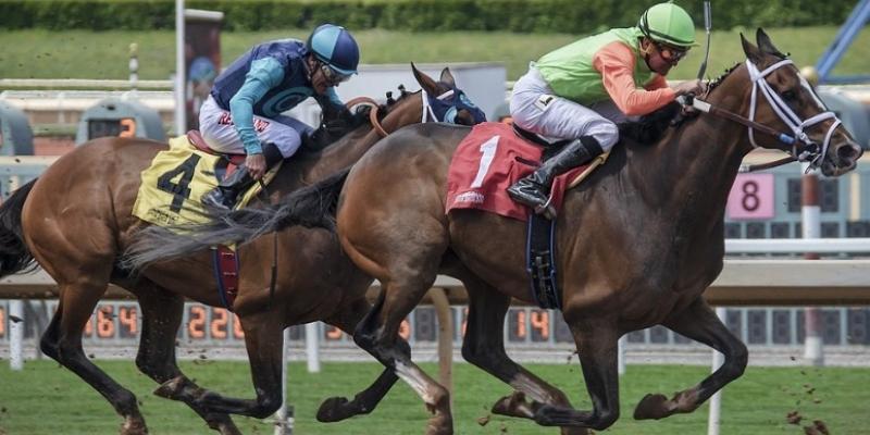 Ruby fortune Casino: Nick Dandolos machte sein Geld mit Pferdewetten